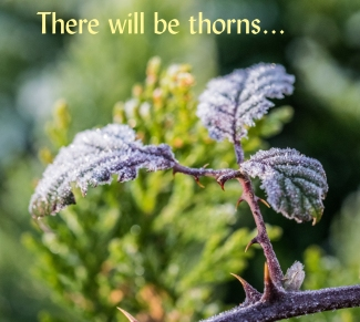 There will be thorns Lent 2018