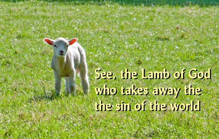 Lamb of God_Ashridge Sheep