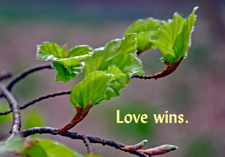 Love wins 0019Ashridge210411Z (editA)