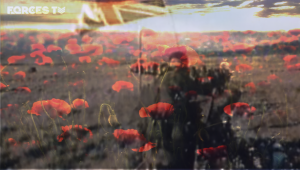 forces TV poppies